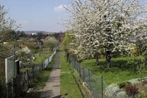 Kirschbüte in der Kolonie Bergfrieden