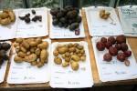 Kartoffelvielfalt